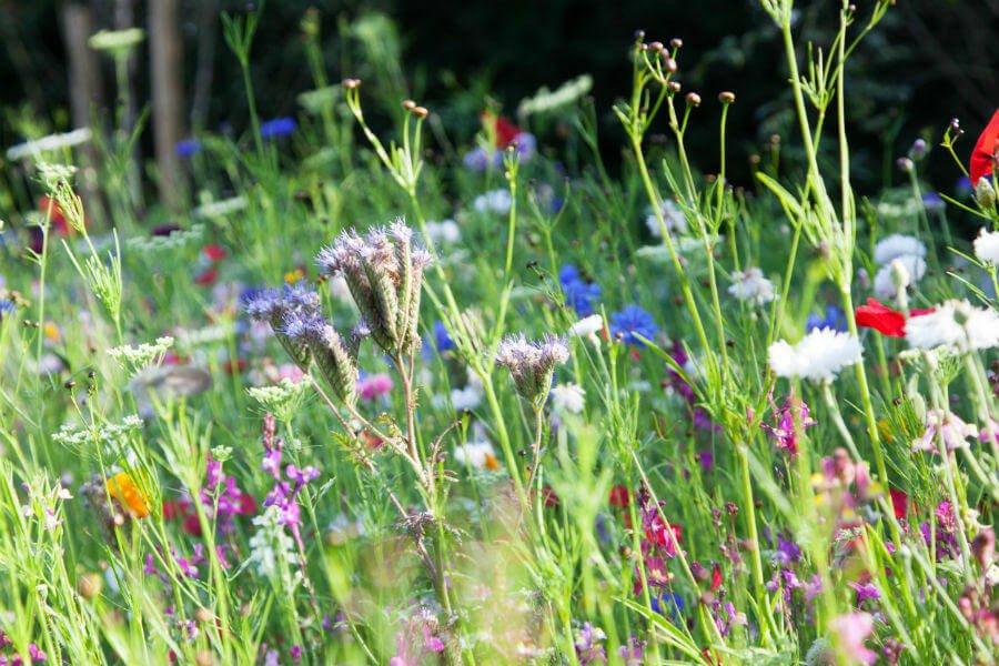Shop Garden - Meadow Flowers